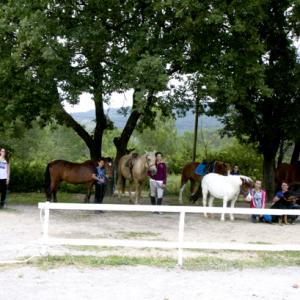 centre equestre ecole FFE aix en provence-64