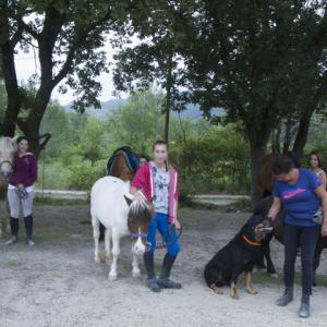 centre equestre ecole FFE aix en provence-68