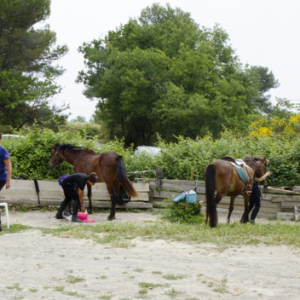 centre equestre ecole FFE aix en provence-82