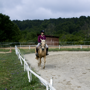 centre equestre ecole FFE aix en provence00