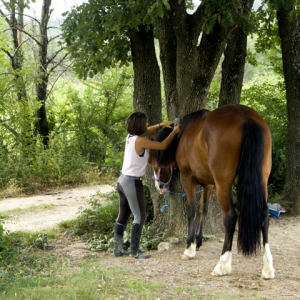 centre equestre ecole FFE aix en provence71